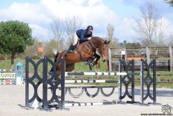 Retour des chevaux en concours